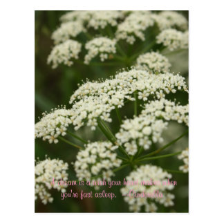 Queen Anne's Lace- Stamp Postcard