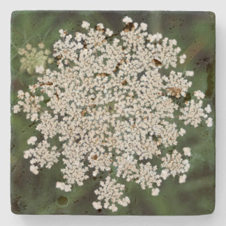 Queen Anne's Lace Stone Coaster