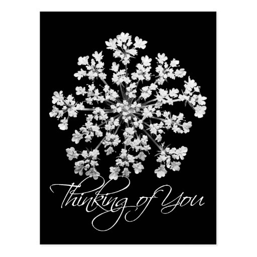 Queen Anne's Lace Thinking of  You Postcard