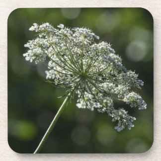 Queen Anne's Lace White Wildflower Coasters