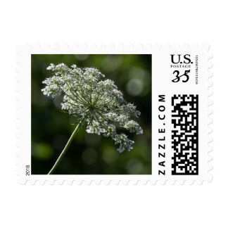 Queen Anne's Lace White Wildflower Postage Stamps