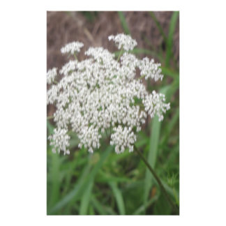 Queen Anne's Lace Wildflower Personalized Stationery