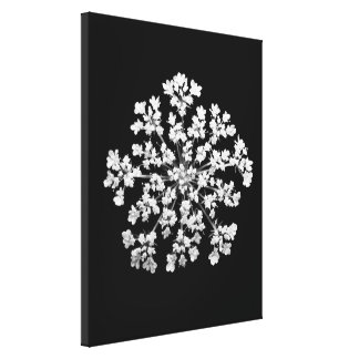 Queen Anne's Lace Wrapped Canvas