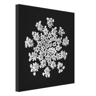 'Queen Anne's Snowflake' Wrapped Canvas Print