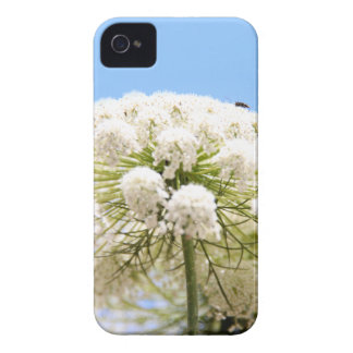 Queen Anne's white Lace flower against blue sky iPhone 4 Case-Mate Case