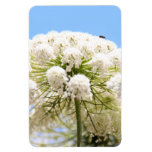 Queen Anne's white Lace flower against blue sky Rectangular Magnets