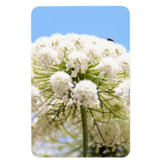 Queen Anne's white Lace flower against blue sky Rectangular Photo Magnet