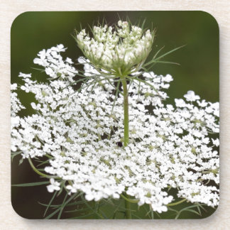 Queen Ann's Lace Coaster