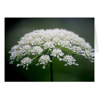 Queen Ann's Lace Flower Card