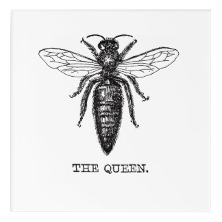 Queen Bee Drawing Vintage Black Acrylic Print