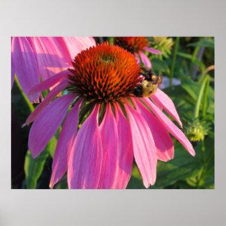 Queen Bee On Purple Coneflower Posters