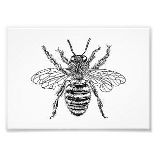 Queen Bee Art Photo