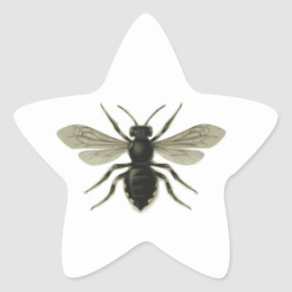 Queen Bee Yellow Black Save The Bees Star Sticker