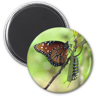 Queen Butterfly and Monarch Caterpillar Magnet