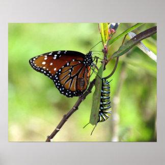 Queen Butterfly and Monarch Caterpillar Poster