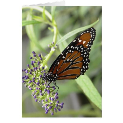 Queen Butterfly - Customizable Blank Notecard