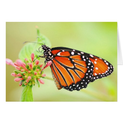 Queen Butterfly Greeting Cards