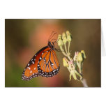 Queen butterfly on a branch greeting card
