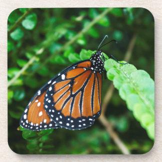 Queen Butterfly on Fern Coasters