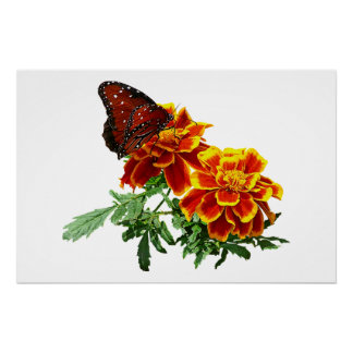 Queen Butterfly on Marigold Poster