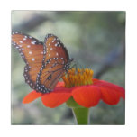 Queen Butterfly on Mexican Sunflower Ceramic Tile