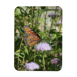 Queen Butterfly on Purple Flower Magnet