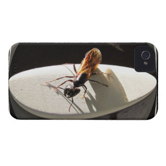 Queen Carpenter Ant ~ iPhone 4 CaseMate Barely iPhone 4 Cover