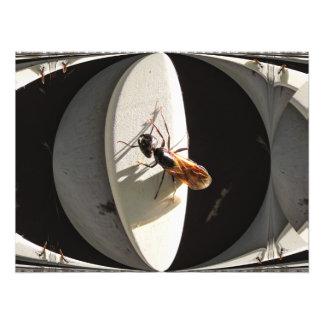 Queen Carpenter Ant ~ Photo