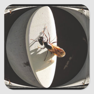 Queen Carpenter Ant ~ sticker