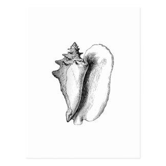 Queen Conch line art Postcards
