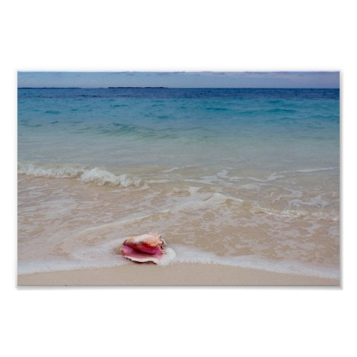 Queen Conch on the Beach, Bahamas Poster