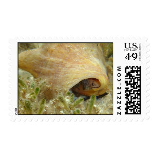 Queen conch postage stamps