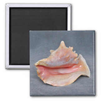 Queen Conch Shell Refrigerator Magnets