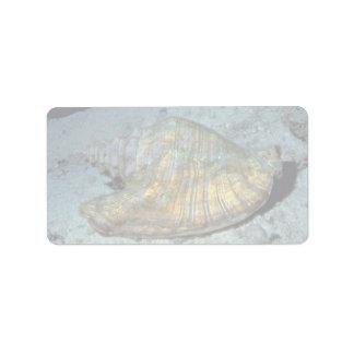 Queen conch Strombus gigas Shell Custom Address Label