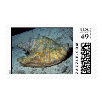 Queen conch Strombus gigas Shell Postage Stamps