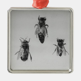 Queen Drone Worker Bee Keeping Apiology Apiarist Metal Ornament