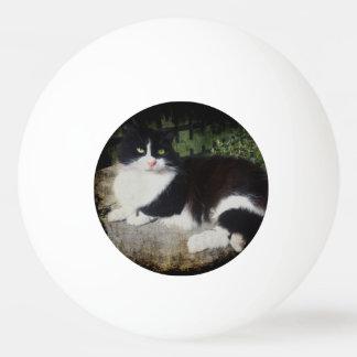 Queen of the Garden Cat Ping Pong Ball