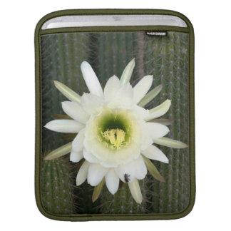 Queen Of The Night Cactus Flower, Karoo Region iPad Sleeve