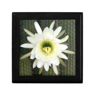 Queen Of The Night Cactus Flower, Karoo Region Keepsake Box