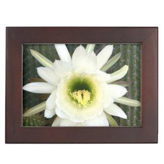 Queen Of The Night Cactus Flower, Karoo Region Memory Box