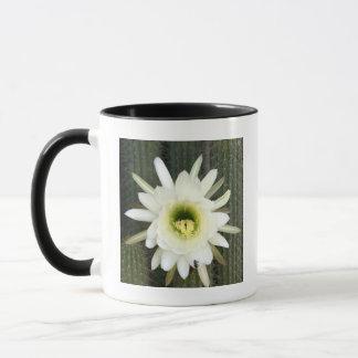 Queen Of The Night Cactus Flower, Karoo Region Mug