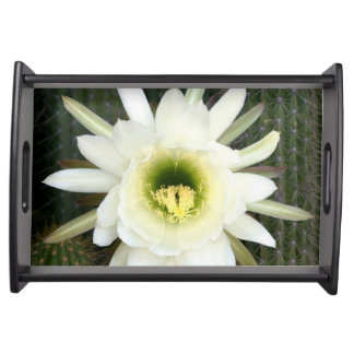 Queen Of The Night Cactus Flower, Karoo Region Serving Tray