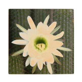 Queen Of The Night Cactus Flower, Karoo Region Wooden Coaster
