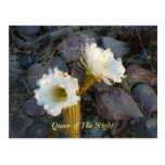 Queen Of The Night Cactus Postcard