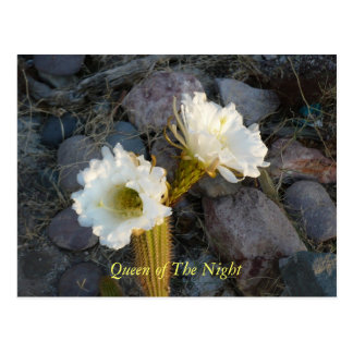 Queen Of The Night Cactus Postcard