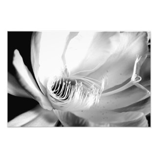 Queen of the Night close-up in Black and White Photo Print