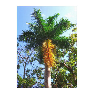 Queen Palm Tree Canvas Print