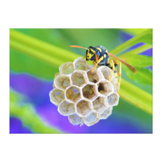 Queen Paper Wasp Tending to Her Nest Stretched Canvas Print