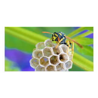 Queen Paper Wasp Tending to Her Nest Photo Card
