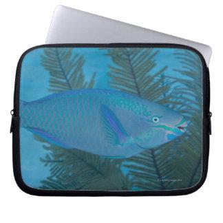 Queen Parrotfish (Scarus vetula) swimming over Computer Sleeve